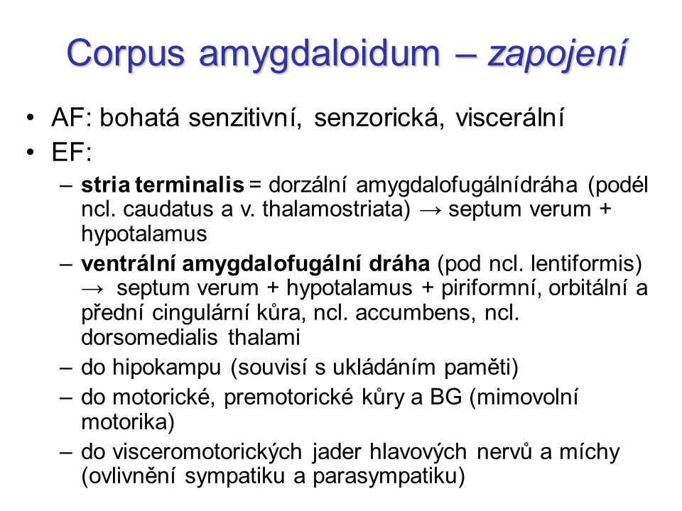 Corpus amygdaloidum – zapojení