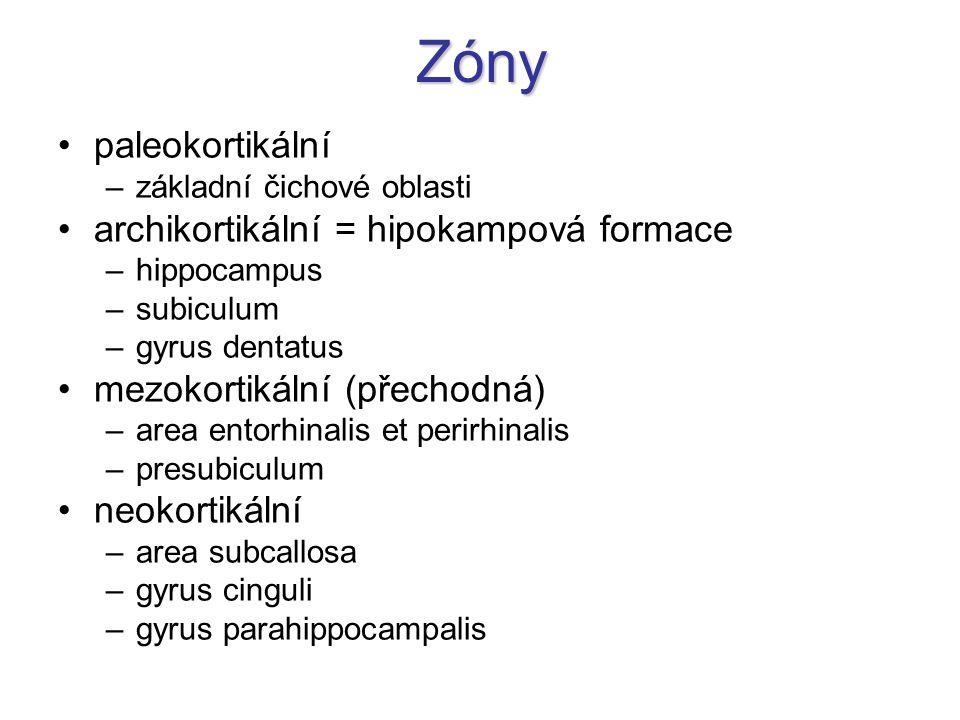 Zóny paleokortikální archikortikální = hipokampová formace