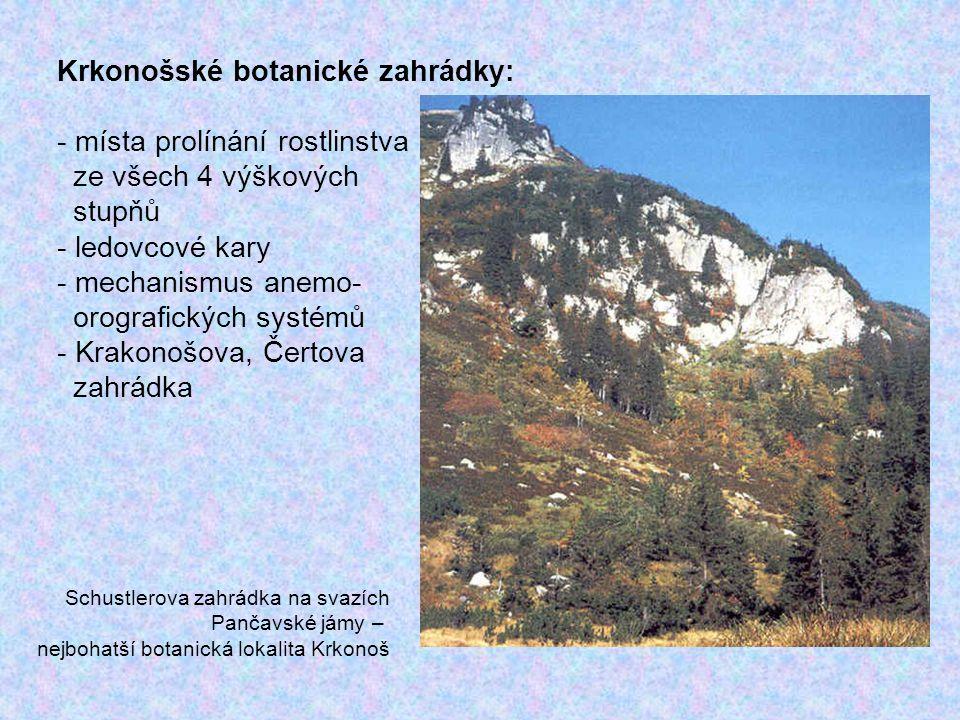 Krkonošské botanické zahrádky: místa prolínání rostlinstva