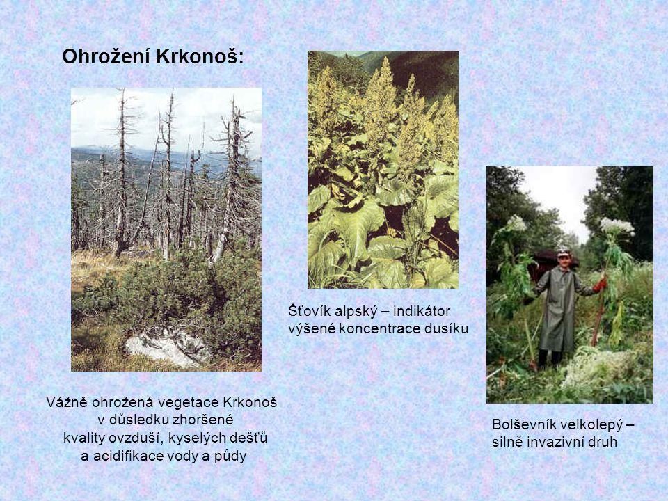 Ohrožení Krkonoš: Šťovík alpský – indikátor výšené koncentrace dusíku