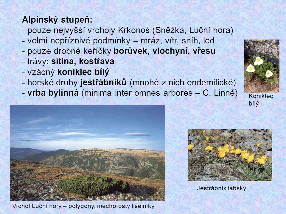 pouze nejvyšší vrcholy Krkonoš (Sněžka, Luční hora)