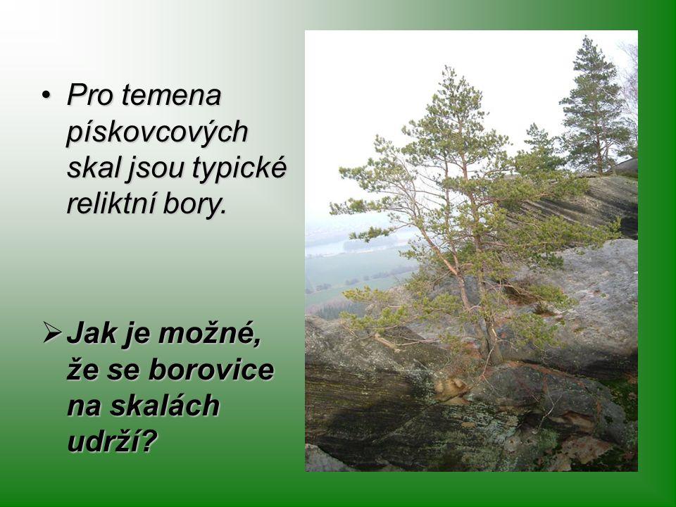 Pro temena pískovcových skal jsou typické reliktní bory.