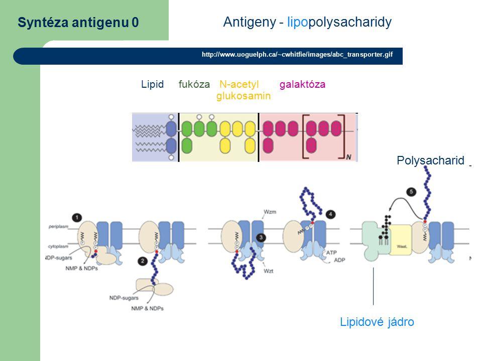 Antigeny - lipopolysacharidy