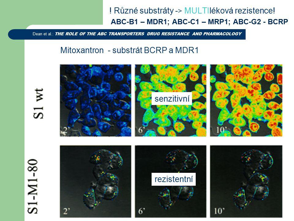 ABC-B1 – MDR1; ABC-C1 – MRP1; ABC-G2 - BCRP