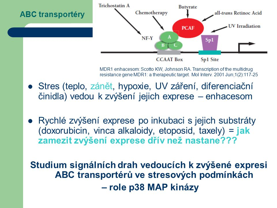 ABC transportéry MDR1 enhacesom: Scotto KW, Johnson RA. Transcription of the multidrug.