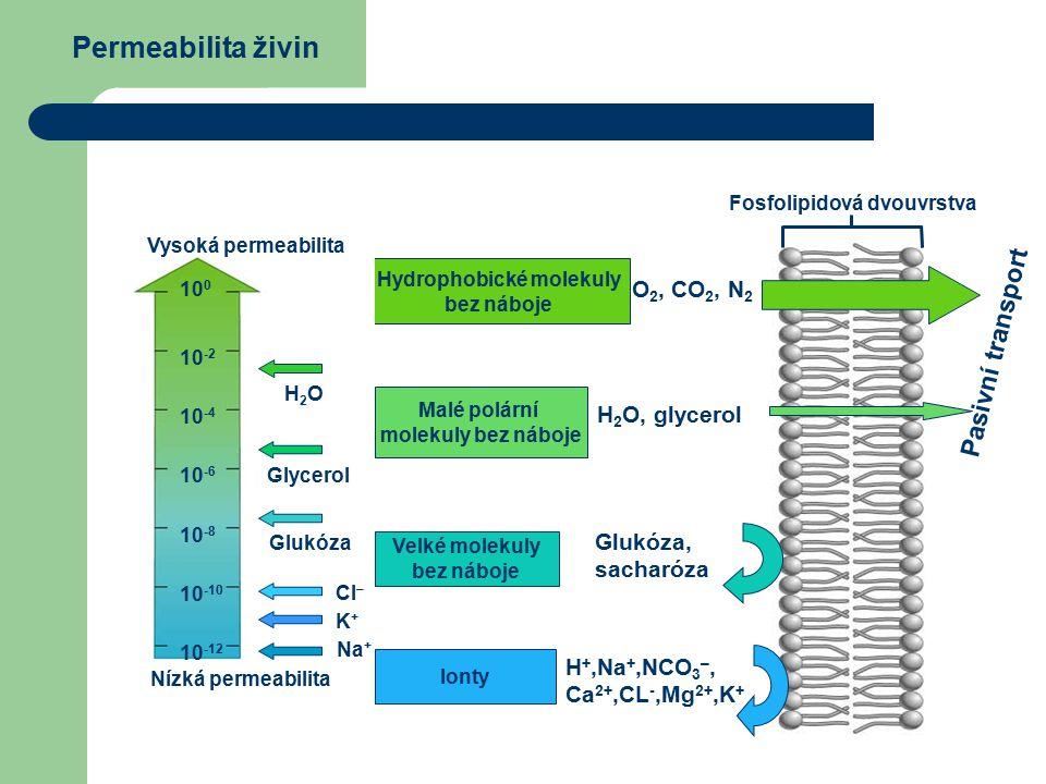 Hydrophobické molekuly