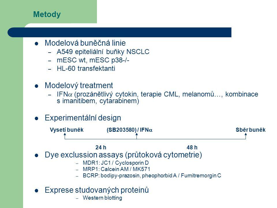 Modelová buněčná linie