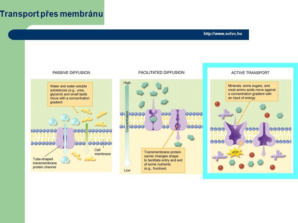 Transport přes membránu