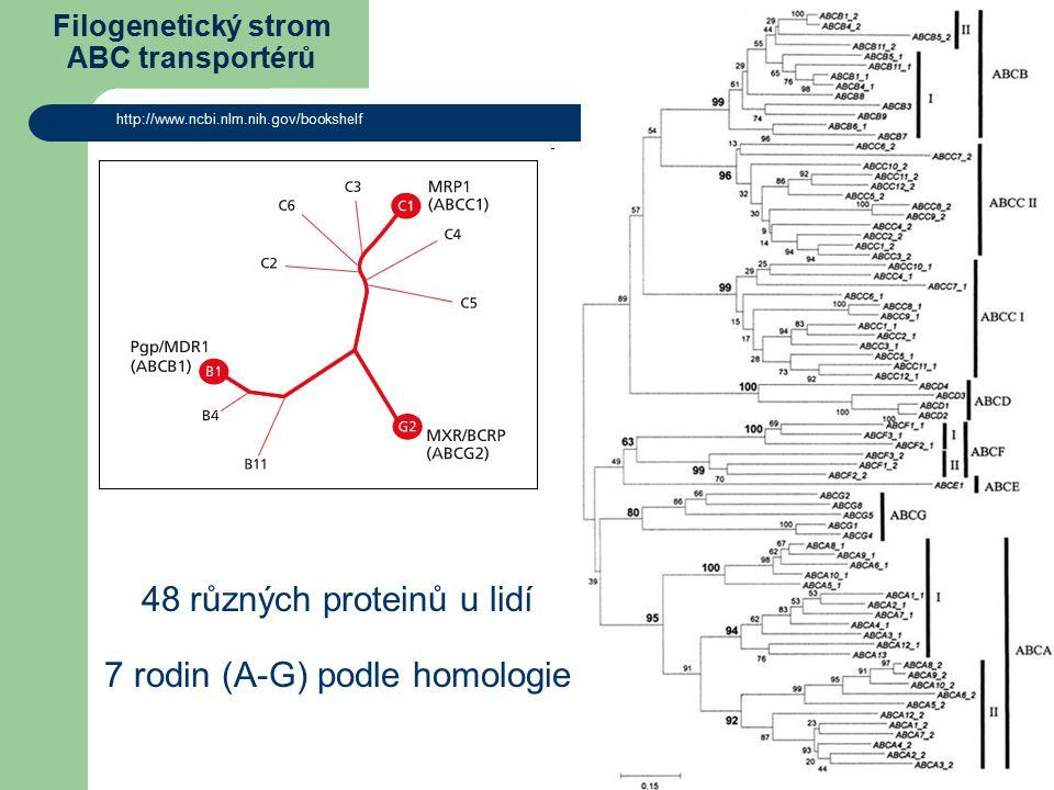 Filogenetický strom ABC transportérů