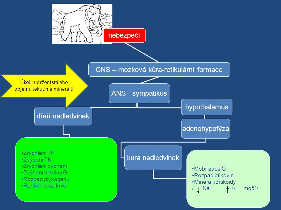 CNS – mozková kůra-retikulární formace