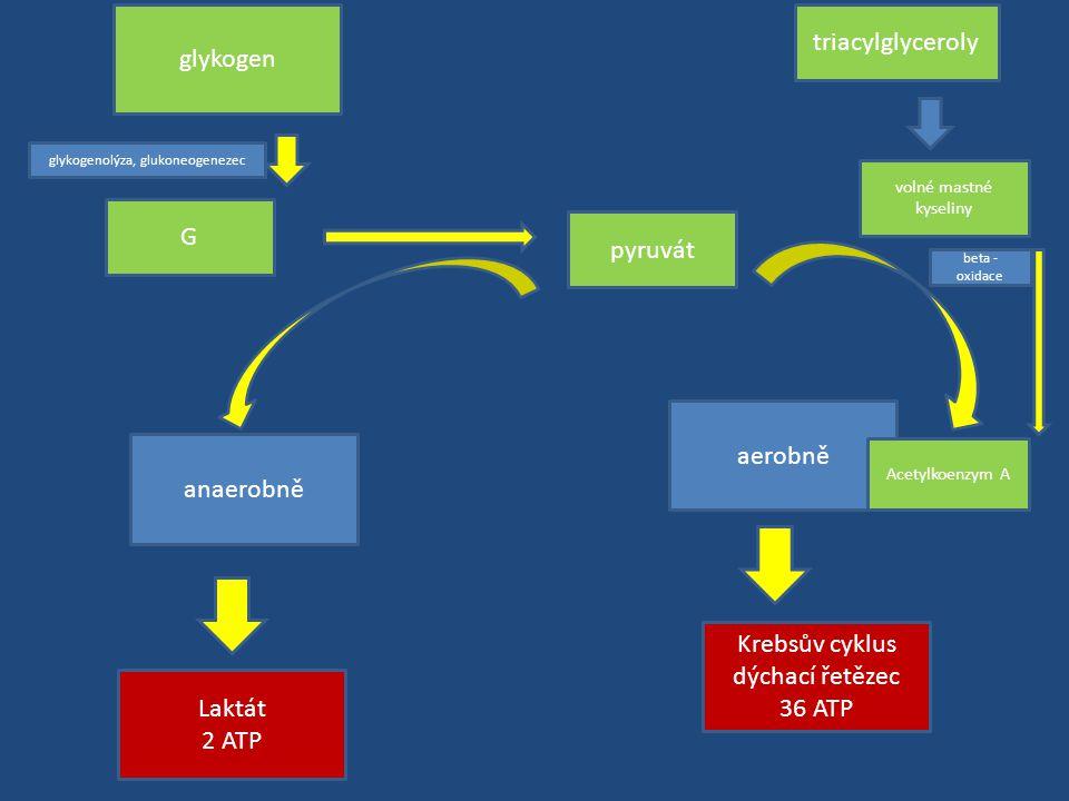 glykogenolýza, glukoneogenezec