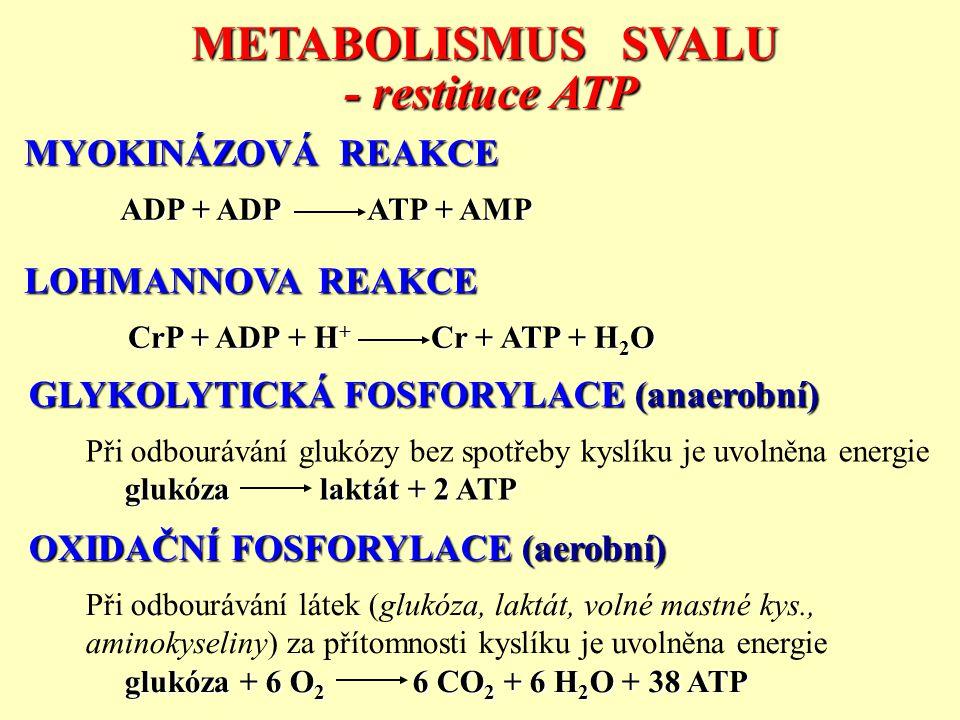 METABOLISMUS SVALU - restituce ATP
