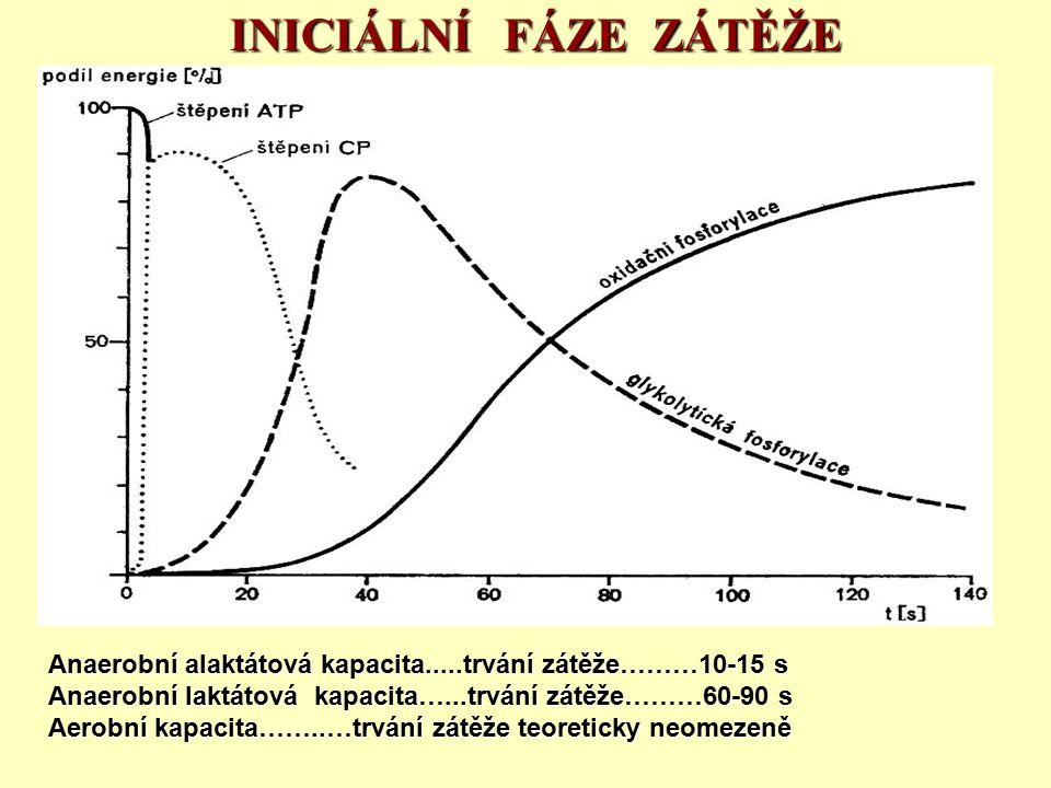 INICIÁLNÍ FÁZE ZÁTĚŽE Anaerobní alaktátová kapacita.....trvání zátěže………10-15 s. Anaerobní laktátová kapacita…...trvání zátěže………60-90 s.