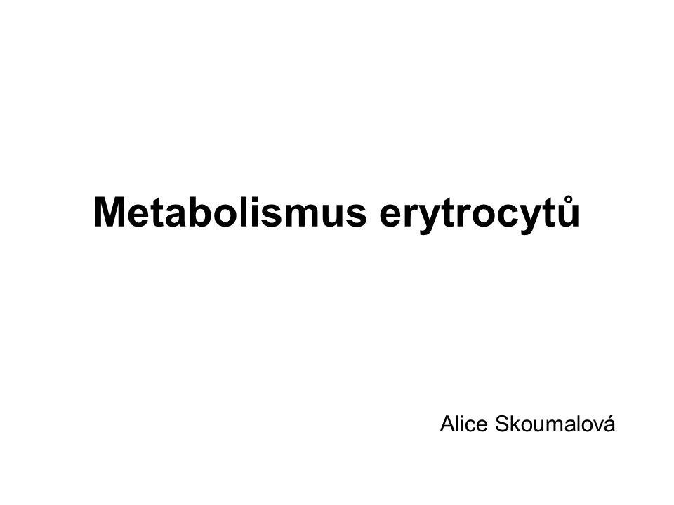 Metabolismus erytrocytů