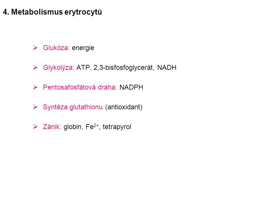 4. Metabolismus erytrocytů
