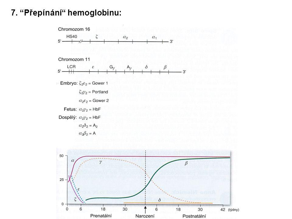 7. Přepínání hemoglobinu: