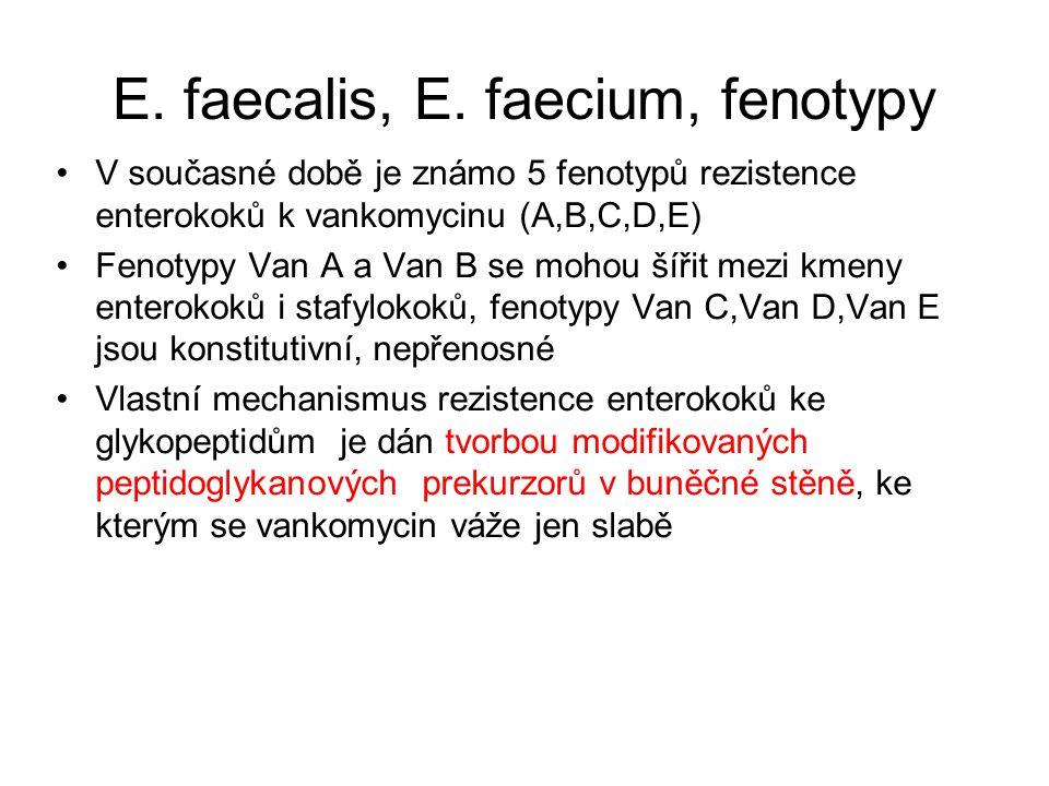 E. faecalis, E. faecium, fenotypy