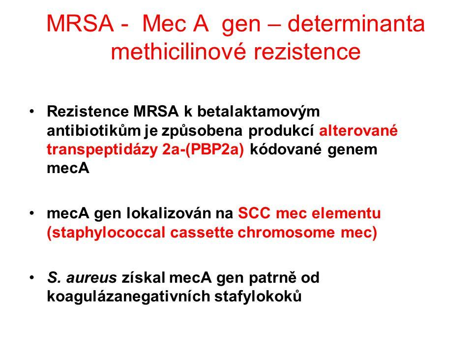 MRSA - Mec A gen – determinanta methicilinové rezistence