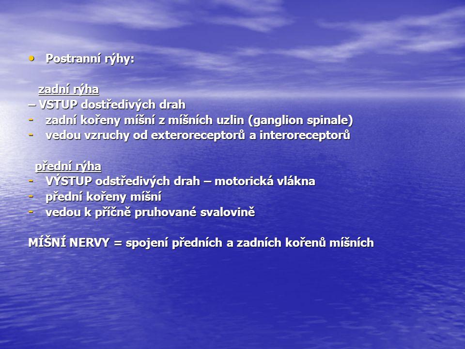 Postranní rýhy: zadní rýha. – VSTUP dostředivých drah. zadní kořeny míšní z míšních uzlin (ganglion spinale)