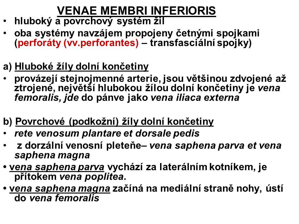 VENAE MEMBRI INFERIORIS