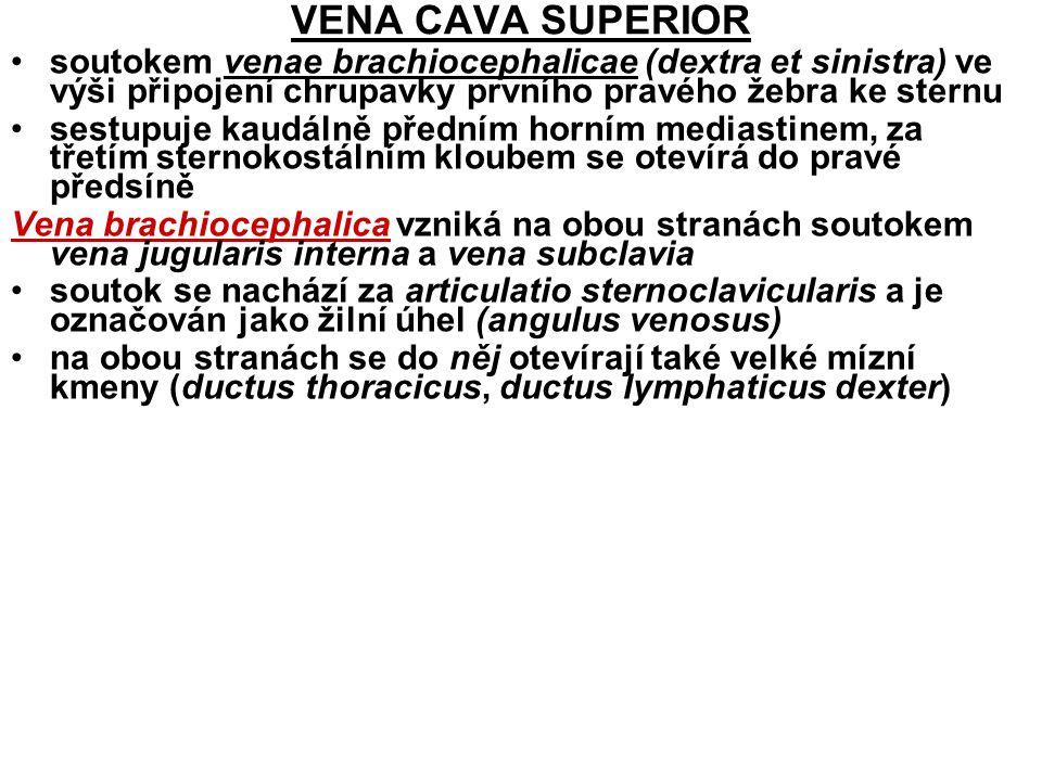 VENA CAVA SUPERIOR soutokem venae brachiocephalicae (dextra et sinistra) ve výši připojení chrupavky prvního pravého žebra ke sternu.