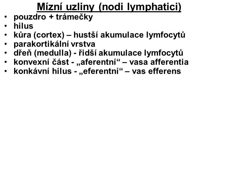 Mízní uzliny (nodi lymphatici)