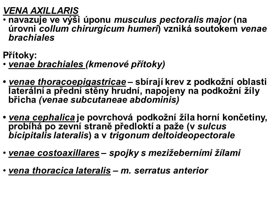 VENA AXILLARIS navazuje ve výši úponu musculus pectoralis major (na úrovni collum chirurgicum humeri) vzniká soutokem venae brachiales.