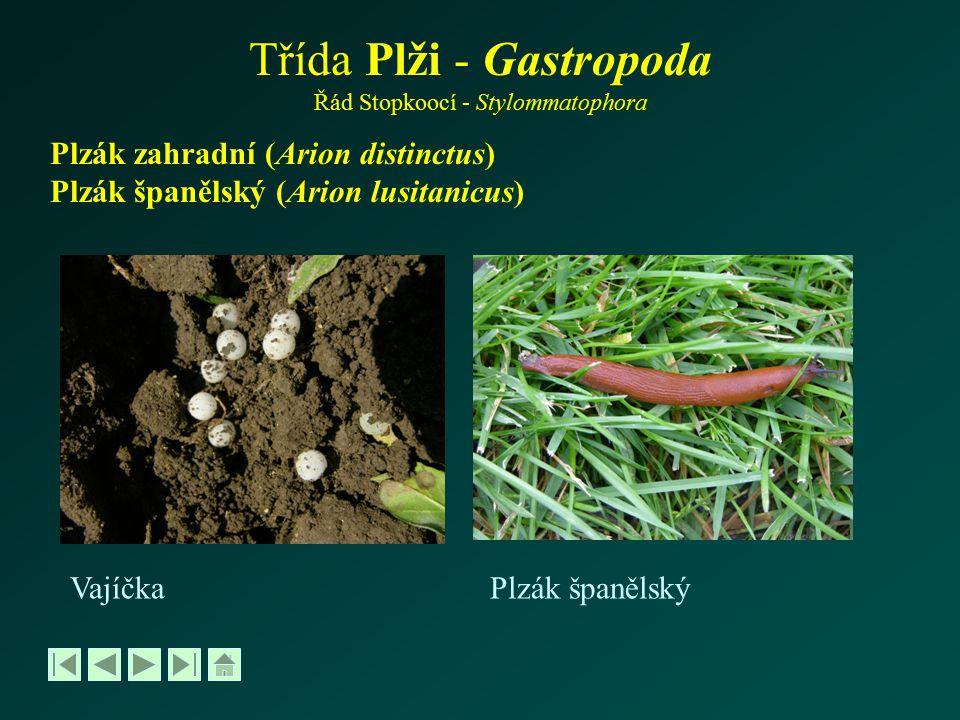 Třída Plži - Gastropoda Řád Stopkoocí - Stylommatophora