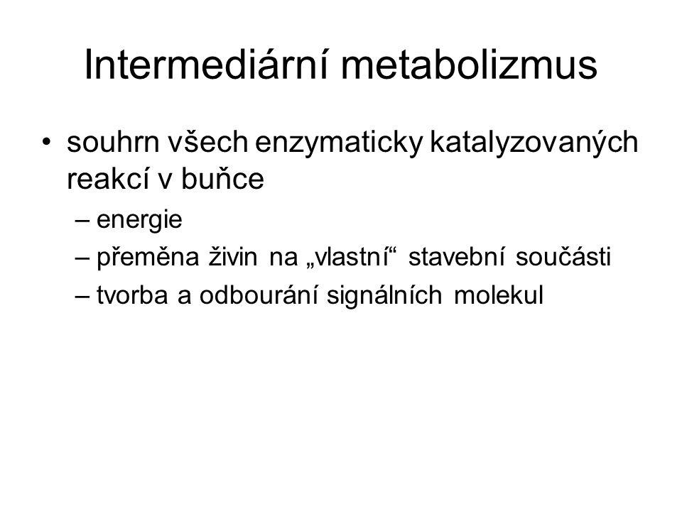 Intermediární metabolizmus