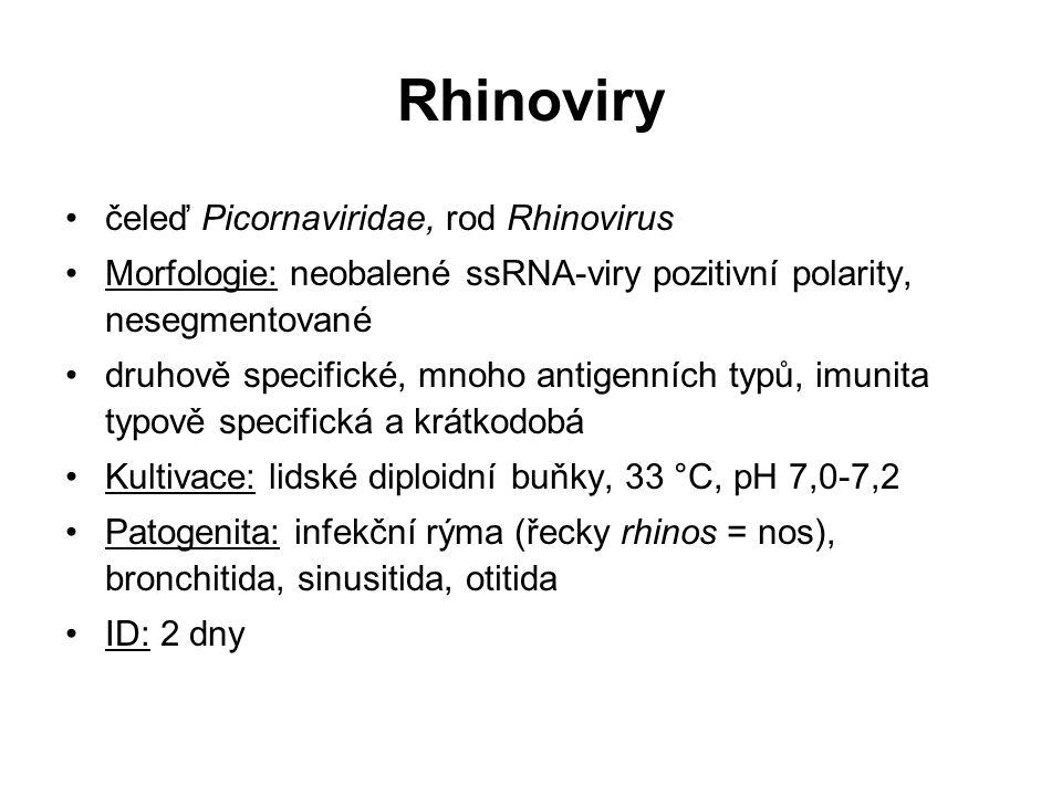 Rhinoviry čeleď Picornaviridae, rod Rhinovirus
