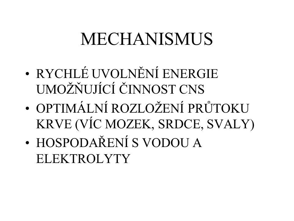 MECHANISMUS RYCHLÉ UVOLNĚNÍ ENERGIE UMOŽŇUJÍCÍ ČINNOST CNS