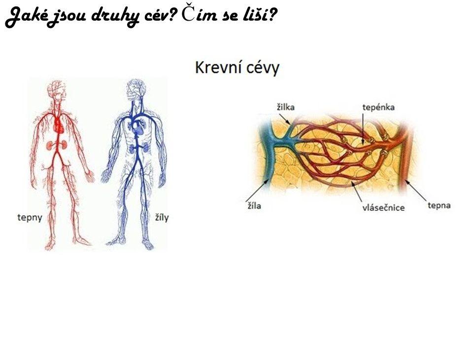 Jaké jsou druhy cév Čím se liší