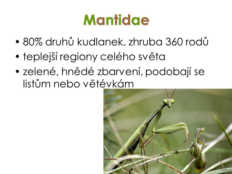 Mantidae 80% druhů kudlanek, zhruba 360 rodů