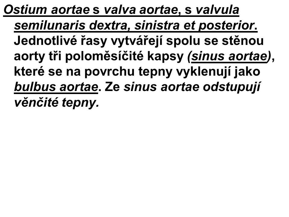 Ostium aortae s valva aortae, s valvula semilunaris dextra, sinistra et posterior.