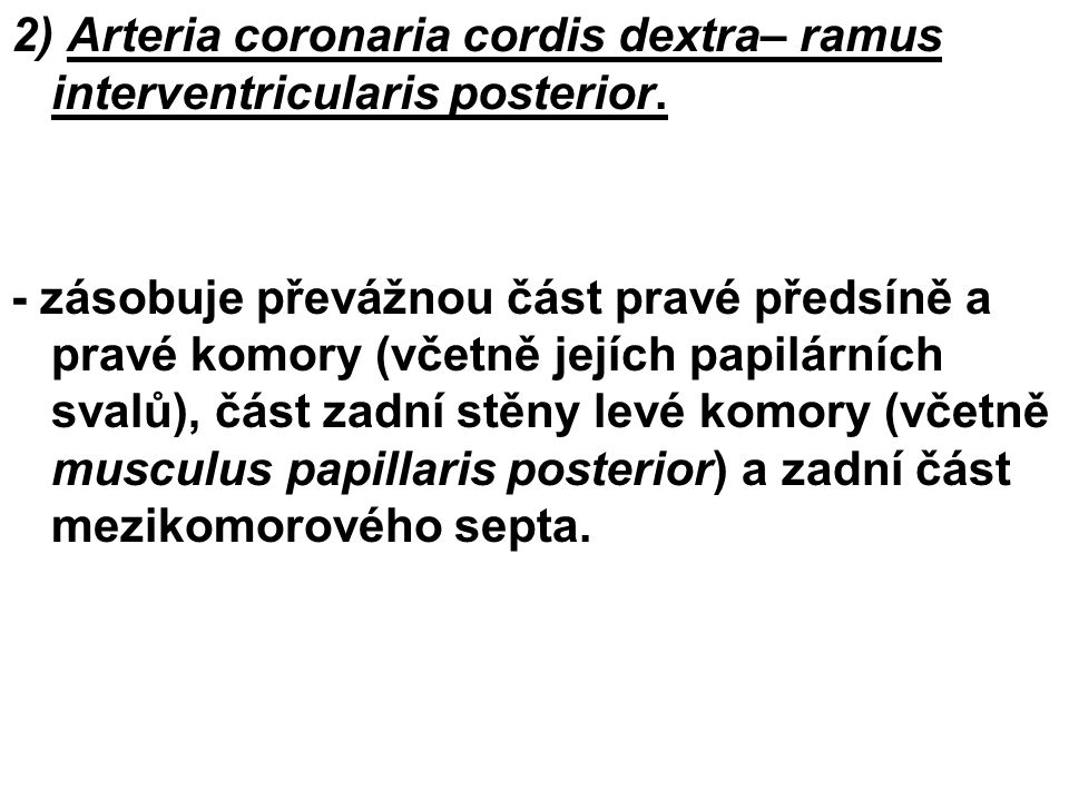 2) Arteria coronaria cordis dextra– ramus interventricularis posterior.