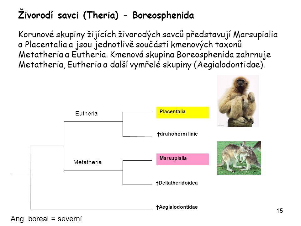 Živorodí savci (Theria) - Boreosphenida Korunové skupiny žijících živorodých savců představují Marsupialia a Placentalia a jsou jednotlivě součástí kmenových taxonů Metatheria a Eutheria. Kmenová skupina Boreosphenida zahrnuje Metatheria, Eutheria a další vymřelé skupiny (Aegialodontidae).