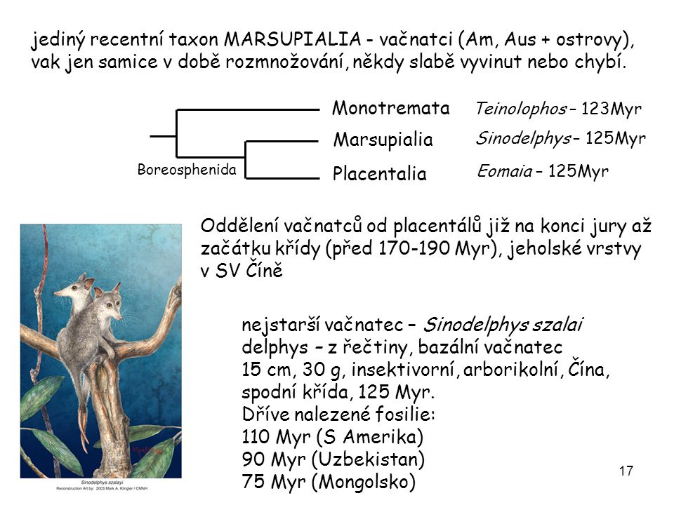 nejstarší vačnatec – Sinodelphys szalai