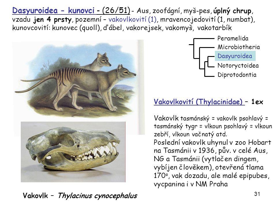 Dasyuroidea - kunovci - (26/51) - Aus, zoofágní, myš-pes, úplný chrup, vzadu jen 4 prsty, pozemní – vakovlkovití (1), mravencojedovití (1, numbat), kunovcovití: kunovec (quoll), ďábel, vakorejsek, vakomyš, vakotarbík