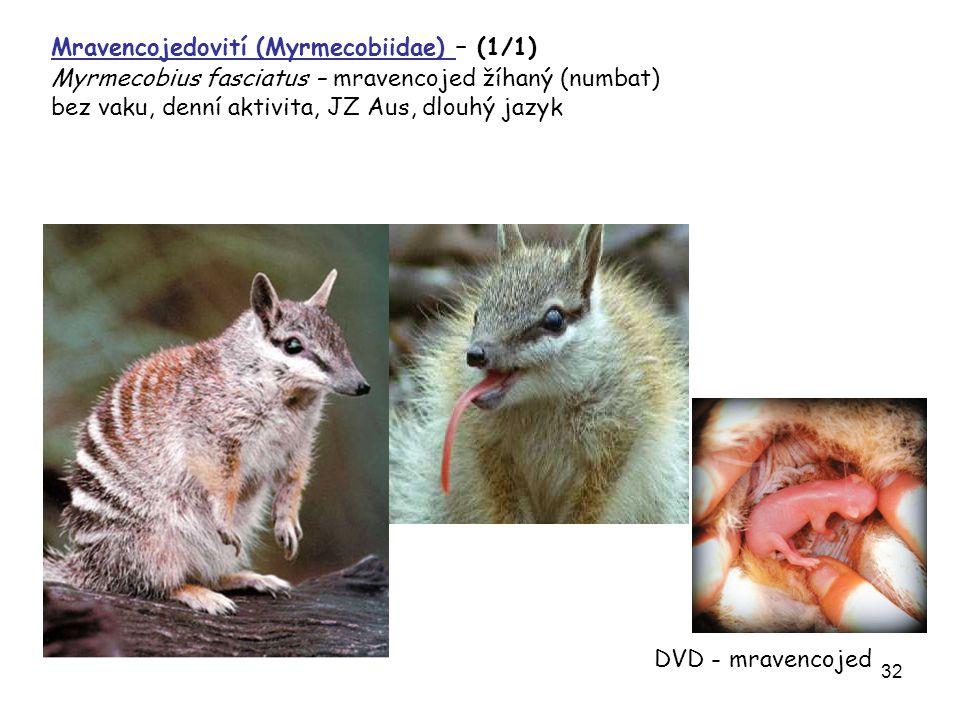 Mravencojedovití (Myrmecobiidae) – (1/1)