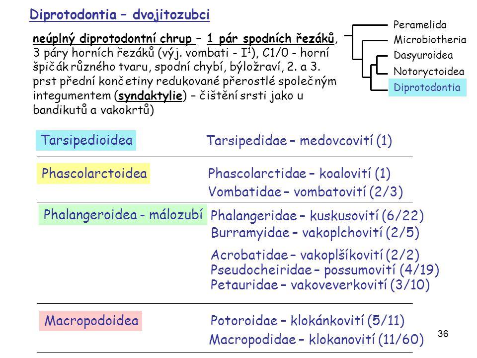 Diprotodontia – dvojitozubci