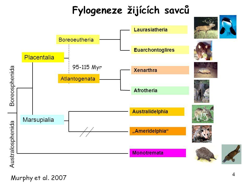 Fylogeneze žijících savců