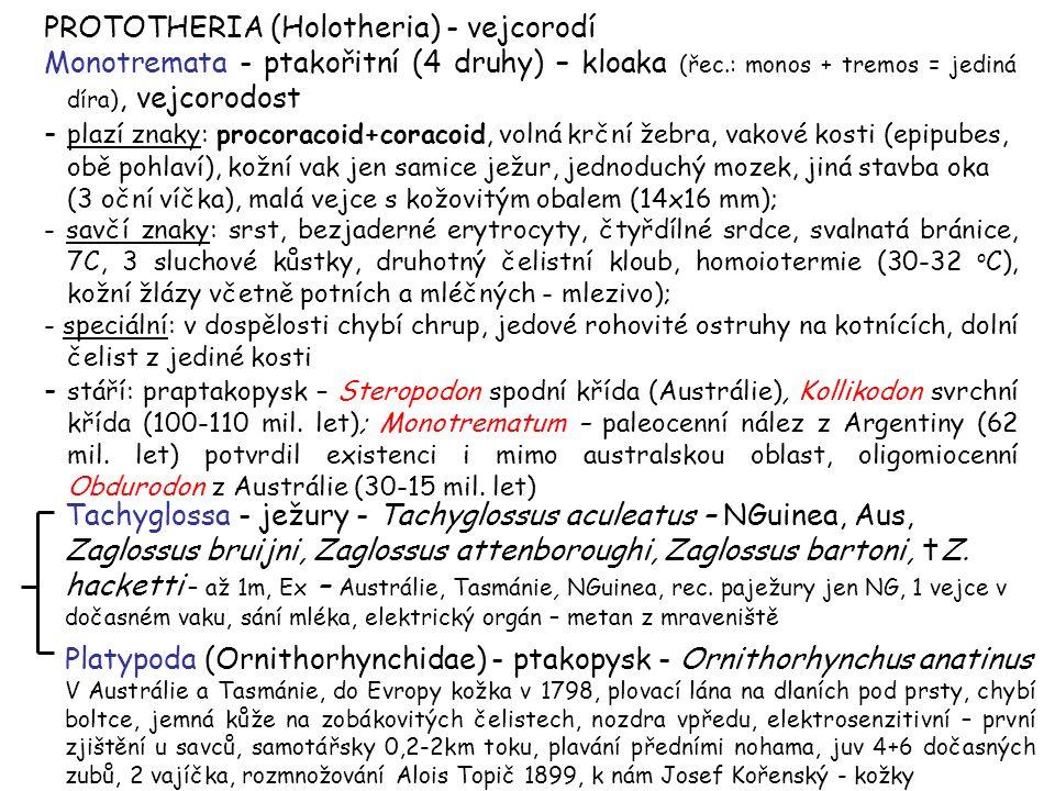 PROTOTHERIA (Holotheria) - vejcorodí