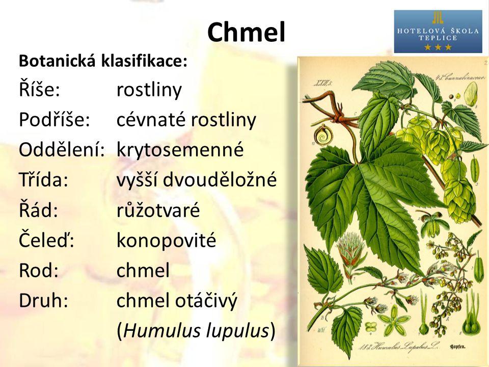 Chmel Říše: rostliny Podříše: cévnaté rostliny Oddělení: krytosemenné