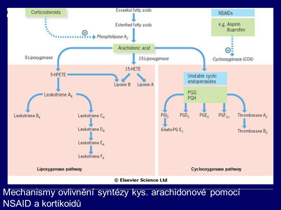 Mechanismy ovlivnění syntézy kys