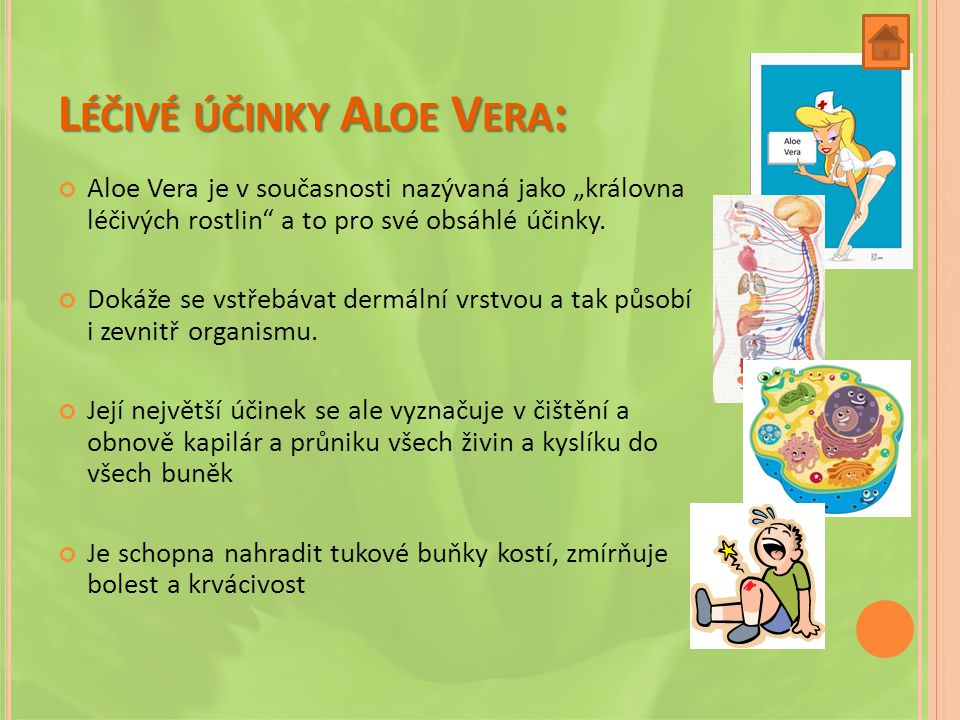 Léčivé účinky Aloe Vera: