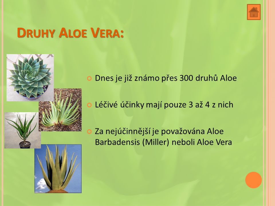 Druhy Aloe Vera: Dnes je již známo přes 300 druhů Aloe