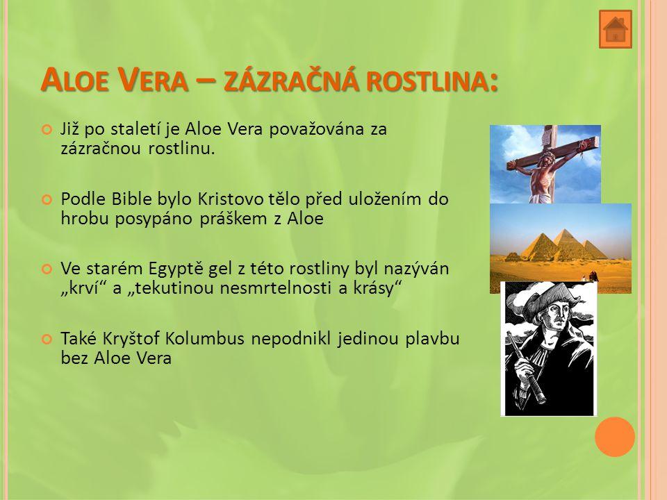 Aloe Vera – zázračná rostlina: