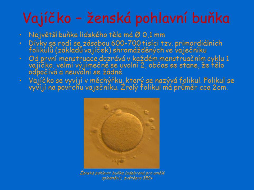 Vajíčko – ženská pohlavní buňka