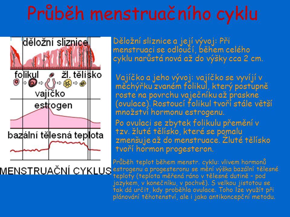 Průběh menstruačního cyklu
