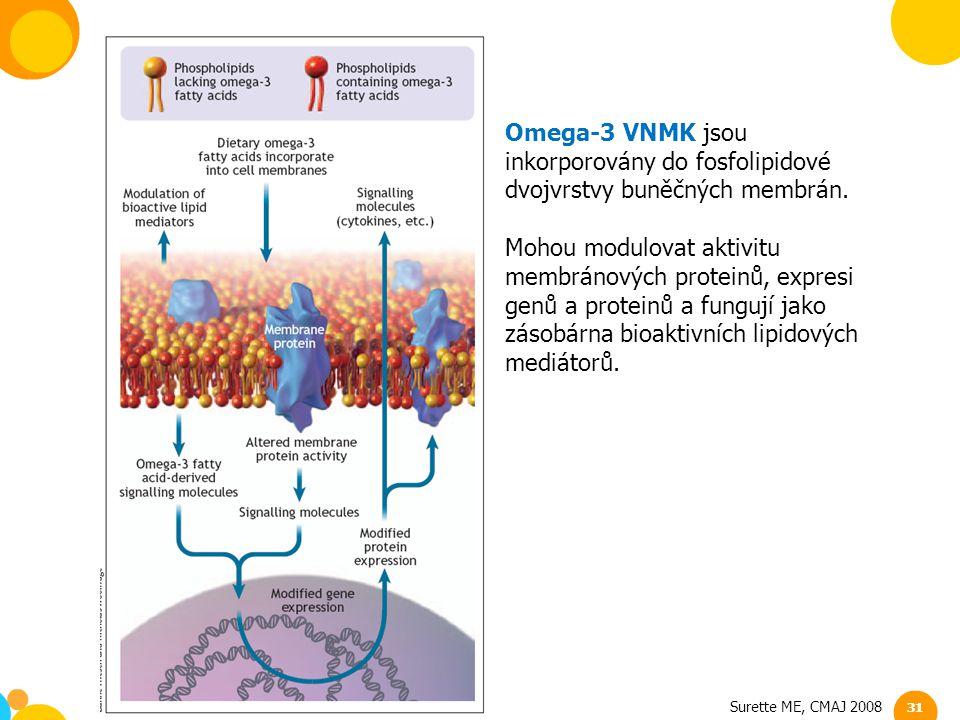 Omega-3 VNMK jsou inkorporovány do fosfolipidové dvojvrstvy buněčných membrán.